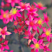 Aussie Floral Expo